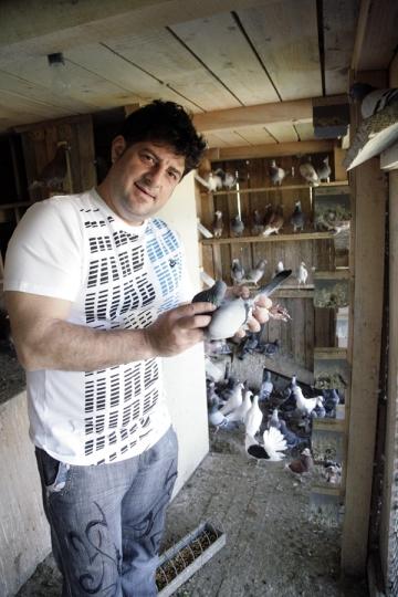 Tavi Colen isi pregateste porumbeii pentru concurs