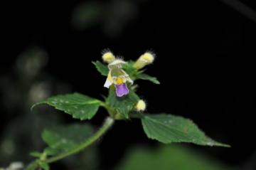 """Flower's Blossom"": flori exotice intr-o expozitie inedita"