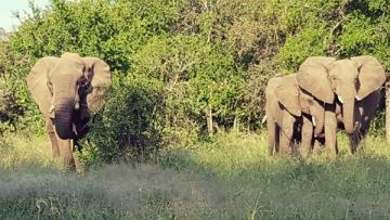 Africa de Sud, un taram ce merita sa fie vizitat